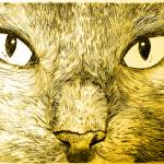 """Yellow Gary"" by onepepinillo"