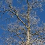 """""""winter tree"""" by JulieScholz"""