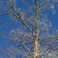 winter tree by julie scholz