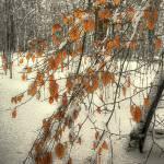 """""""Prospect Park Winter"""" by jeffwatts"""