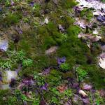 """Forest Floor Moss and Leaves Photography"" by GinetteCallaway"