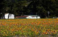 Bob's Vegetable Stand & Pumpkin Farm