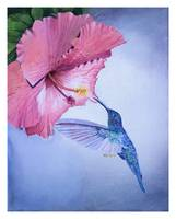 Blue hummingbird hovering near pink hibiscus