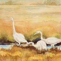 Three Egrets Art Prints & Posters by Sharon Morgio