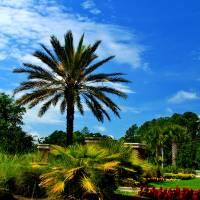 Florida scenic Art Prints & Posters by Wayne Logan