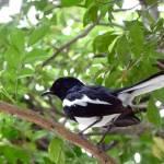 """""""Cambodia Bird"""" by AllisonAuer"""