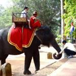 """""""Cambodia Elephant"""" by AllisonAuer"""