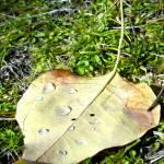 """""""Leaf with Rain"""" by AllisonAuer"""