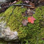 """Mossy Rock Maine Woods 0010"" by KerstPhoto"
