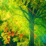 """Memphis Morning"" by katbesthorn"