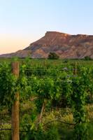 Western Colorado Vineyards