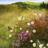 meadow scene with monarch and yellowthroat