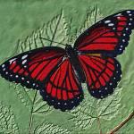 """Textured  Monarch"" by frankreggio"