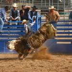"""Wild Bull ride"" by mojorider2"