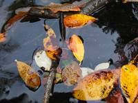 Floating Leaves II