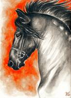 Friesian Stallion Portrait