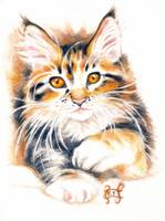 Adorable Maine Coon Kitty