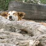 """""""Let Sleeping Dogs Lie"""" by RoarArt"""