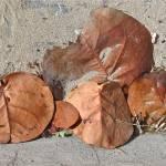 """""""Dry Leaves"""" by RoarArt"""