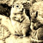 """ground squirrels forever in love"" by bandtdigitaldesigns"