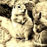 """""""ground squirrels forever in love"""" by bandtdigitaldesigns"""