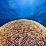"""Brain coral or death star?"" by Triggerfish_Images"