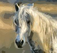 The Camargue beauty