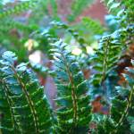 """Forest Ferns Art Prints Nature Green Fern"" by BasleeTroutman"