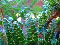 Forest Ferns Art Prints Nature Green Fern