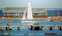Woods Hole Sailing by Robin Amaral