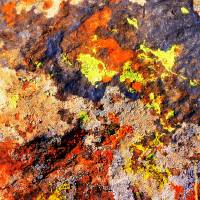 Lichen on a Big Rock Art Prints & Posters by Joanna Barnett Photography