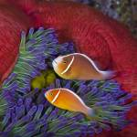 """Bonded"" by Triggerfish_Images"