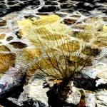 """""""Coral"""" by MyiKandi"""