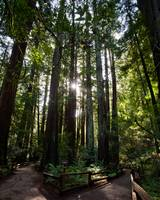 MuirWoods - Cathedral Grove