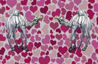 camels in love
