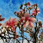 """Spring Blossom"" by pattifriday"