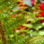 """Green Fern Branch Art Red Flowers Garden"" by BasleeTroutman"