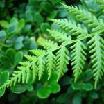 """Green Forest Meadow Fern Branch Art Prints"" by BasleeTroutman"