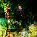 """Garden Wall"" by pattifriday"