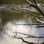 """Melting Snow On Branches Over Rolleston Pond"" by rodjohnson"