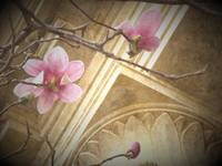 Tulip Tree Blossoms and Architecture - edited