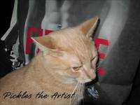 The Artist Cat - Pickles