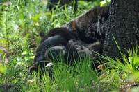 Sleeping Bear, animal photograph.