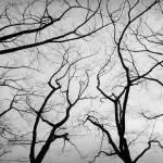 """Lambada"" by doritfuhgphotography"
