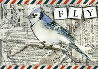 FLY Blue Jay Bird Art