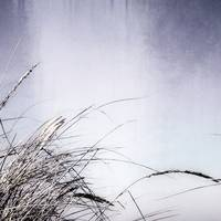 Dune Grass Abstract