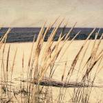 """Dune Grass in the Sunshine"" by Michelle1991"