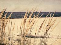 Dune Grass in the Sunshine