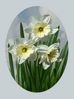 Three Daffodil Blossoms
