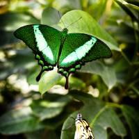 Emerald & paper Art Prints & Posters by F. J. Sochacki Jr